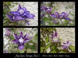 Clematis Stock Pack 1. by Meta-Stock