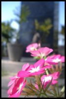 Pretty pink flowers by Somebody-Somewhere