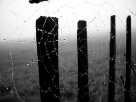 Morning dew I. by little-urchin
