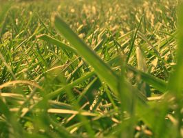 Tinted Grass by erin72
