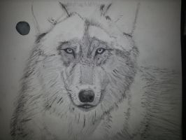 Wolf in progress 3 by VanishedReality