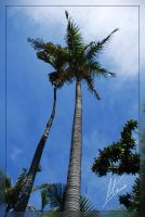 Palm Tree Couple by Morillas