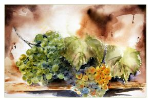 Grapes by janipabel