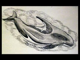 Long Finned Pilot Whale and Orca Hybrid by WeisseEdelweiss