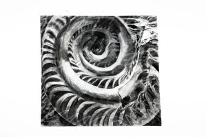 Ammonite on Rock (Charcoal) by boriales