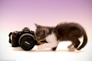 kittens like camera ... by OrazioFlacco