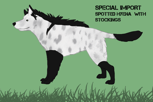 Hyenai Shepherd Special import by Alcemistnv