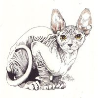 SPHINX CAT by CRYROLFE