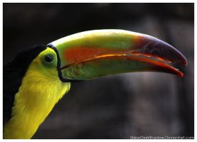 Toucan 003 by ShineOverShadow
