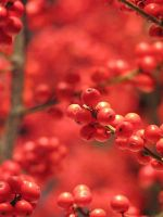 More Berries by kproductions