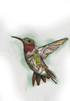 Hummingbird by Andere-Eindringling