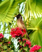 The Bulbul and The Bee by MARX77