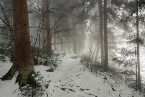 Winterforest72 by moonchild-unveiled