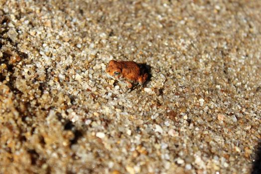 Another Tiny Toad by calliecat113