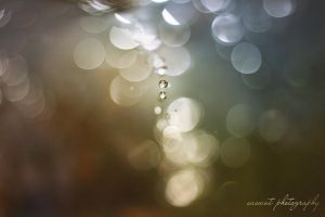 Drops of bokeh by Saswat777