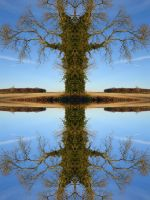 Tree of Knowledge by Compositia