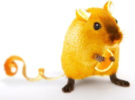 Citrus Mouse by AnthonyHearsey