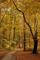 beechen forest VIII by Wilithin