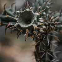 Prickly by Love2B