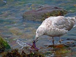 Seagull Playing Boat by wolfwings1