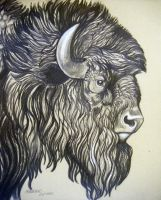 Buffalo Old Bull 3 by HouseofChabrier