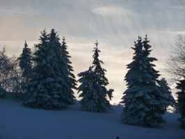 a winters day V by mimose-stock