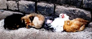 Puppies and Chickens by Guppy0031