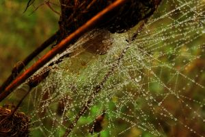 Spider web with water drops by MichalSkrzynski