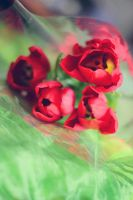 Red tulips by Ur6o