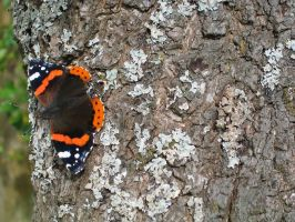 Butterfly on Bark - stock by aphasia100stock