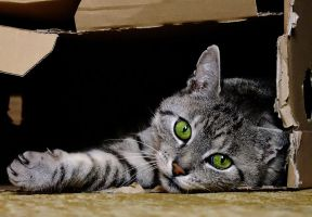 in his box by efeline