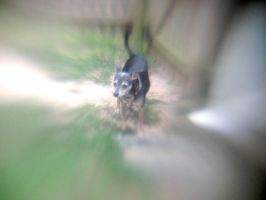 Lensbaby iPhoneography XXXII by LDFranklin