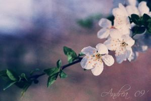 Blossom by Andrea-Deah