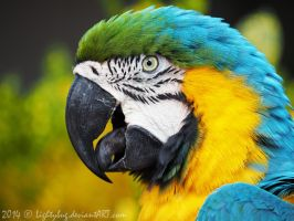 Macaw 1 by Lightybug