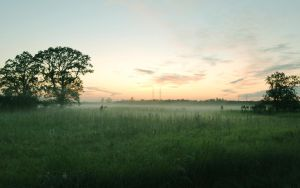 Foggy Field by netherl