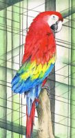 Scarlet Macaw by KCJoughDoitch