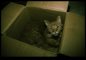 my cat likes boxes by semi-twisted