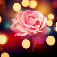 Tear of a rose. .. by addy-ack