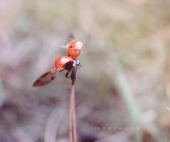 Fly high! by marteczna