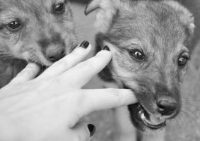 chewing my fingers by JustStrayDog