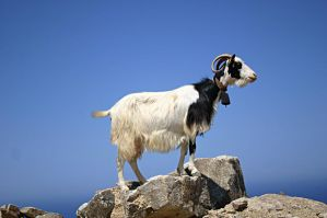 Goat by SylvieRider