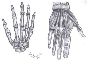 Hands Anatomy Drawing by sassylilmommie