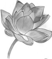 Lotus Flower by Seraph444