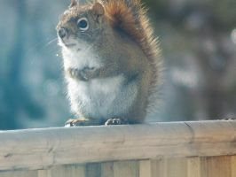 squirrel by Cainamoon