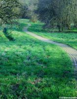 The Morning Path by AbschaumNo1