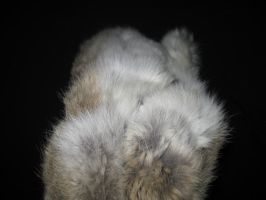 Rabbit Fur 18 by TRANS4MATICA