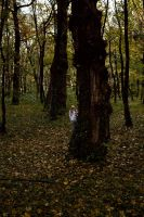 Lord. The Forest. #6 by Kaiohon