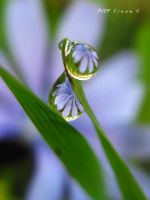 romantic droplets by sinanTR