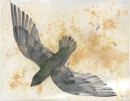 Chimney Swift Watercolor by FindChaos