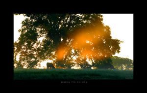 Grazing The Morning by scorpiodesign